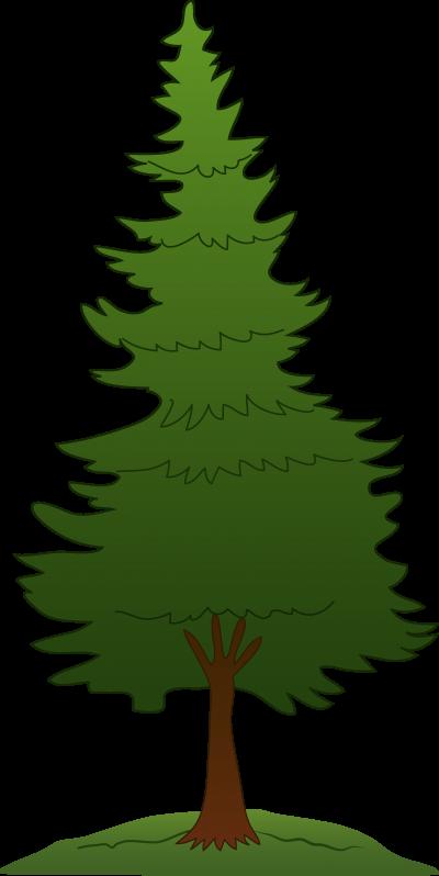 Pine tree transparent background. Download free png image