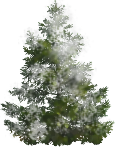 Background Pine Tree