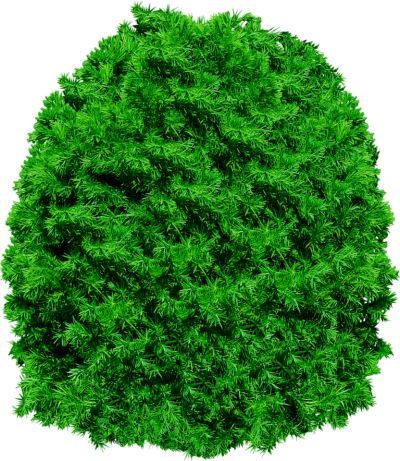 Clipart Pine Tree Transparent PNG Images