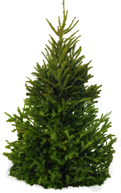 Icon Clipart Pine Tree