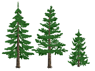 Photos Clipart Pine Tree PNG