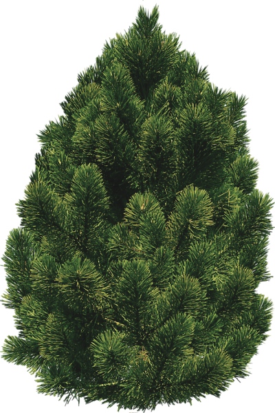 Pine Tree Cut Out