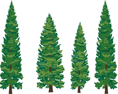 Pine Tree Cut Out Png PNG Images