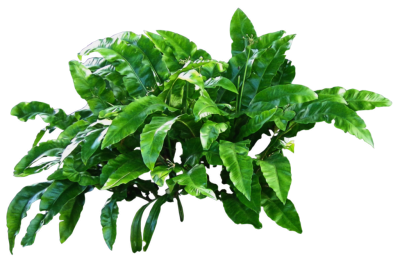 Leaf Plant Photos PNG Images
