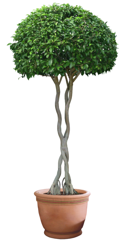 Plant Tree Png 9