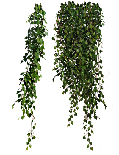 Plant PNG Picture PNG Images