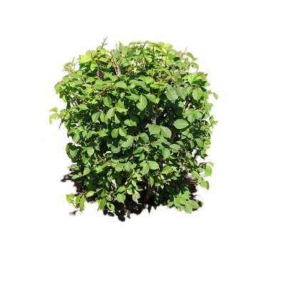 Plants Photo HD Png PNG Images