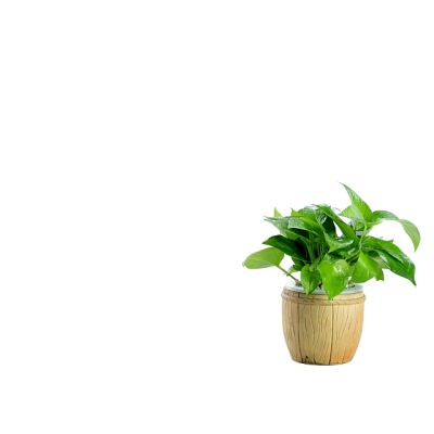 Plants PNG Images PNG Images