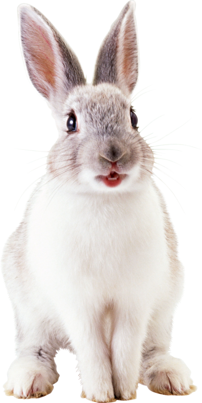 Rabbit Hd Photo PNG Images