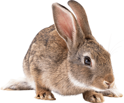 Rabbit Free PNG Images