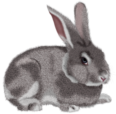 Rabbit Icon Clipart PNG Images