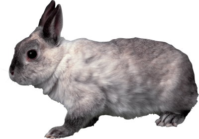 Rabbit Amazing Image Download PNG Images