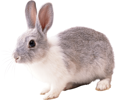 Rabbit Free Download Transparent