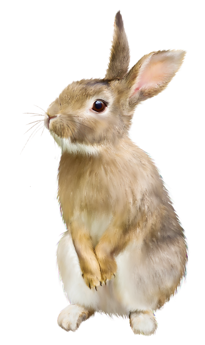 Rabbit Free Download PNG Images