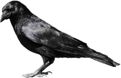 Crow Clipart, Birds And Crow Clipart Images PNG Images