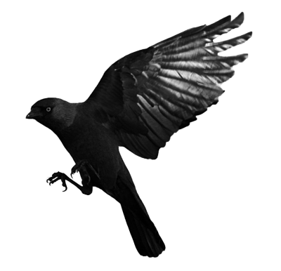 Raven Flying Transparent Png PNG Images