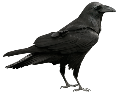 Some interesting Facts About Raven Png PNG Images