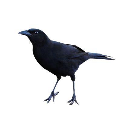 Raven High Quality PNG Images