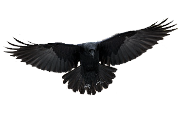 Raven Background PNG Images