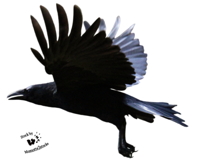 Raven Wonderful Picture Images 17 PNG Images