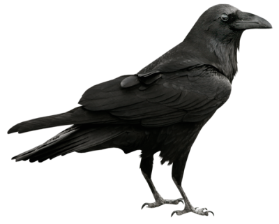 Raven Wonderful Picture Images PNG Images