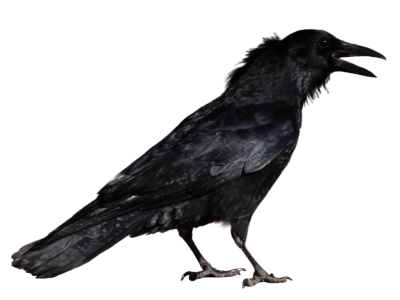 Raven Simple 11 PNG Images
