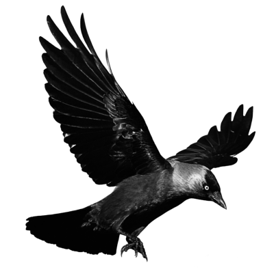 Raven Free Download PNG Images