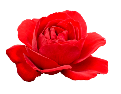 Red Rose Flower Icon Clipart PNG Images
