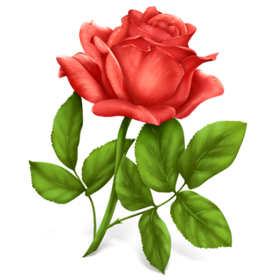 Single Rose Free Download Transparent