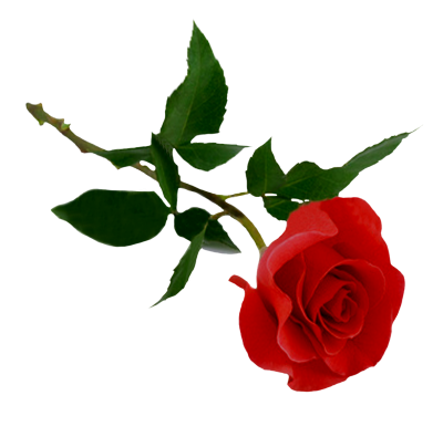 Rose Clipart Photos PNG Images