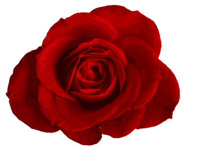 Rose Vector PNG Images