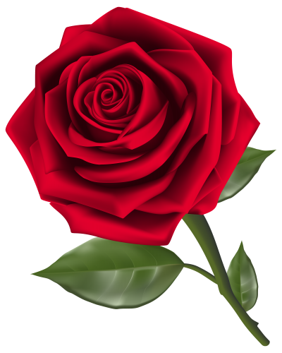 Rose Clipart Flowers Photo PNG Images