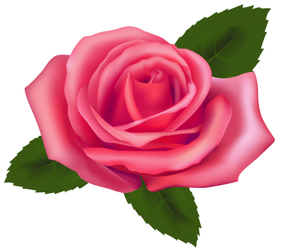 Free Pink Rose Picture PNG Images
