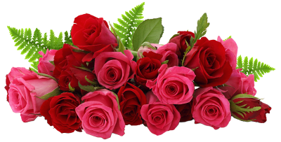 Rose Clipart Transparent 30 PNG Images