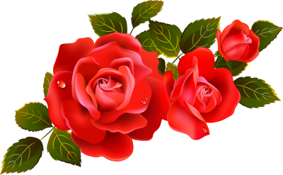 Rose Transparent Background PNG Images