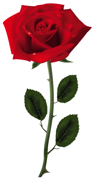 Download Rose Transparent PNG Images