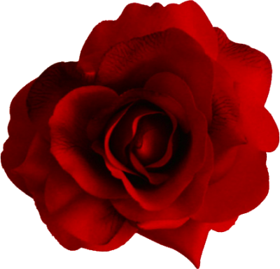 Beautiful Red Rose Png PNG Images