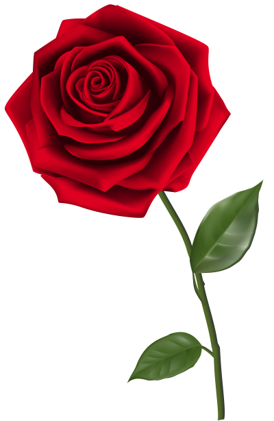 Rose Picture PNG Images