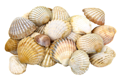 Picture Sea PNG Images