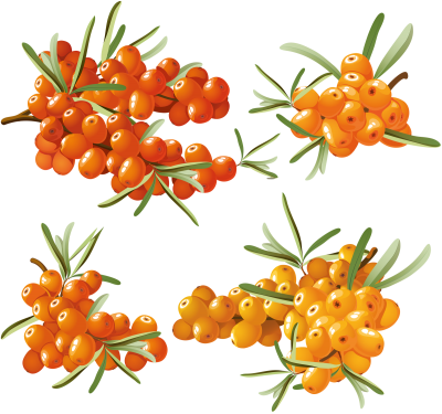 PNG Images Sea PNG Images
