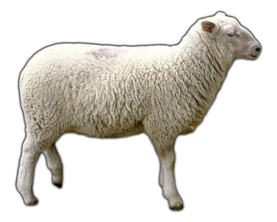 Sheep Transparent Picture PNG Images