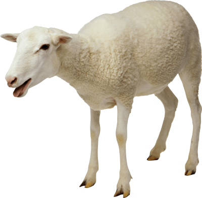 Sheep Best Png PNG Images