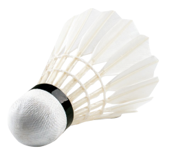 White Peacock Feather Png Images