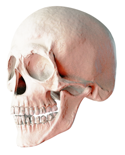 Skeleton Head Clipart HD