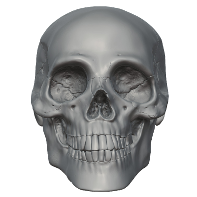 Skeleton Head PNG Picture