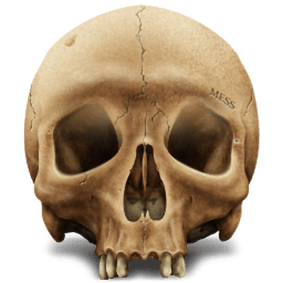 Skeleton Head Clipart PNG Photos