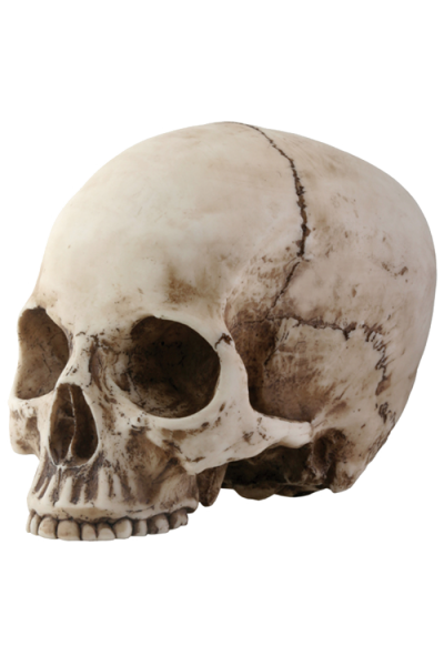Skeleton Head Vector PNG Images