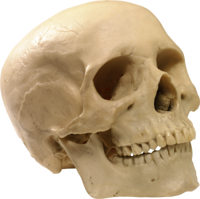Skeleton Head Icon Clipart PNG Images