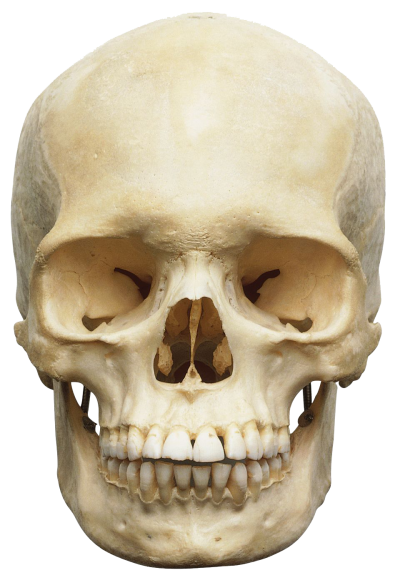 Skeleton Head Free Download Transparent