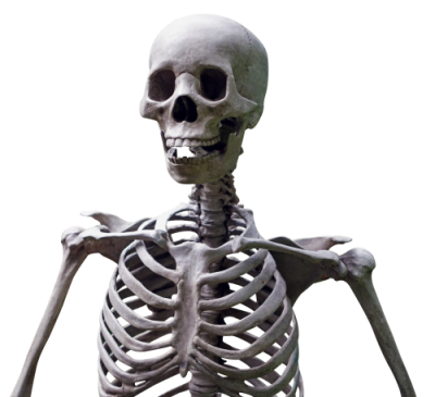 Skeleton Clipart Hd PNG Images
